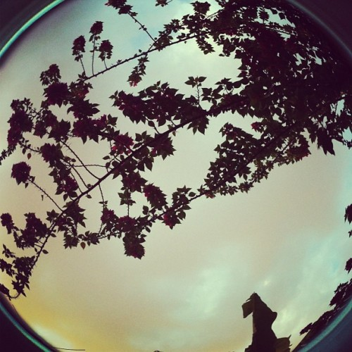 nelisthename:  Fish Eye trial 2 #instapic #fisheye #leaves #nature