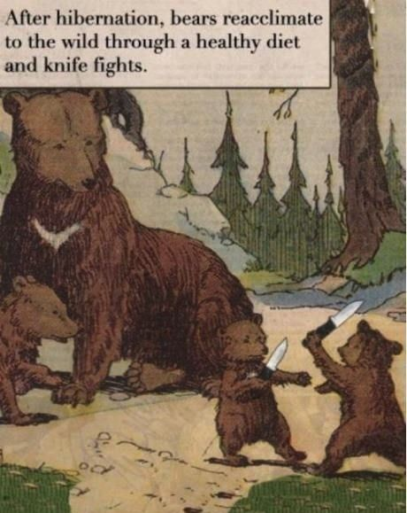 yycstudio:  Bear Knife Fights