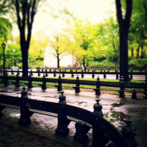 #centralpark #park #NYC #ny #trees #nature #green #yellow