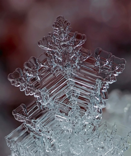 the-star-stuff:  Remarkable Macro Photographs of Ice Structures and Snowflakes Russian photographer Andrew Osokin has done a phenomenal job of capturing such bizarre ice formations, you can explore hundreds more photos over in his LensArt profile.