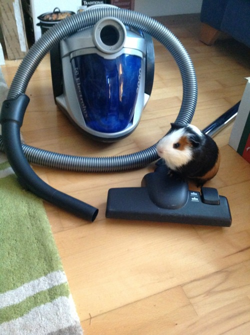 pepsithepig:  Tried to clean up after myself but I couldn't figure out how to use this thing. #piggieproblems