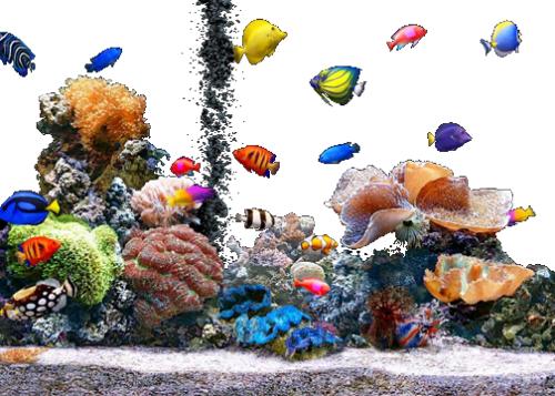 thegoldengurls:  Fish