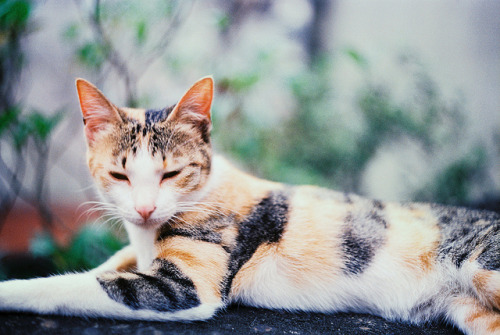 serendipity-precious:  could've been a princess by Kasumi Angel on Flickr.