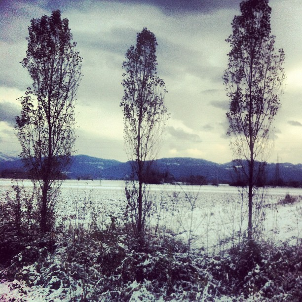 #winter #snow #cold #white #neve #udine #udine20 #tree #friuli #fvg #three #nature #sky #cloud #