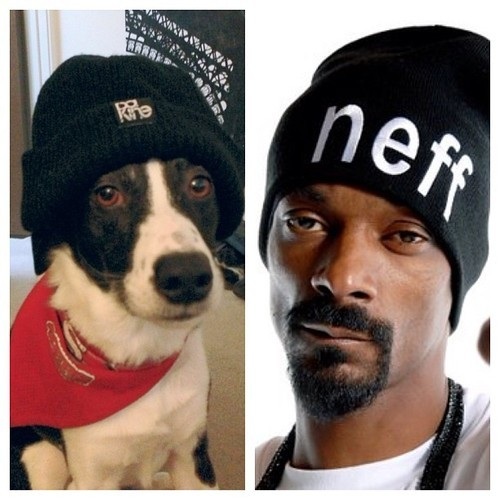 my dog and snoop dogg.