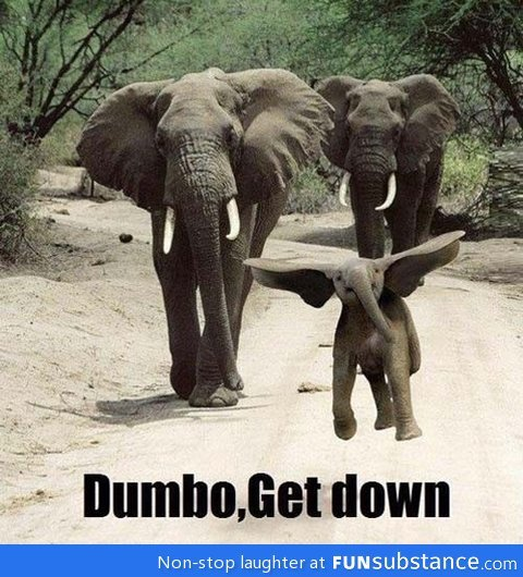 funsubstance:  Dammit dumbo