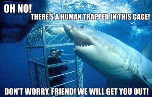 the good shark is always misunderstood