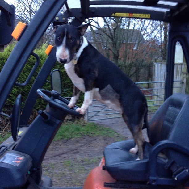 Margot and her beloved forklift truck!