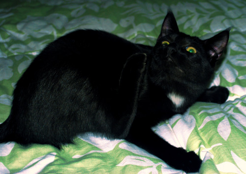 derpycats:  So I took a photo of Inky in a mid-scratch pose and…