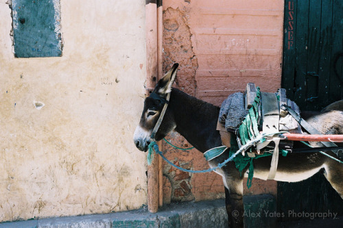 ayonlife:  You Ass! on Flickr. Via Flickr: A donkey, in Marrakech Medina. Leica M7, Zeiss ZM Planar 50mm f2, Kodak Portra 400.