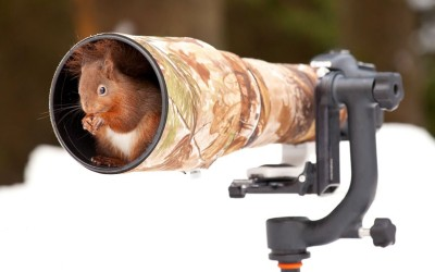 This red squirrel is clearly ready for its close-up as it sits on a camera lens. Picture: Giedrius Stakauskas /Solent News & Photo Agency