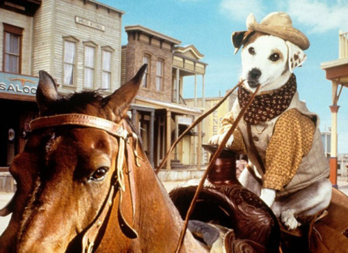 nachodiet:  frickyeah1990s:  Wishbone, aka the coolest dog of the 90s  :)  omg, I loved this show. It was so punny and adorable.