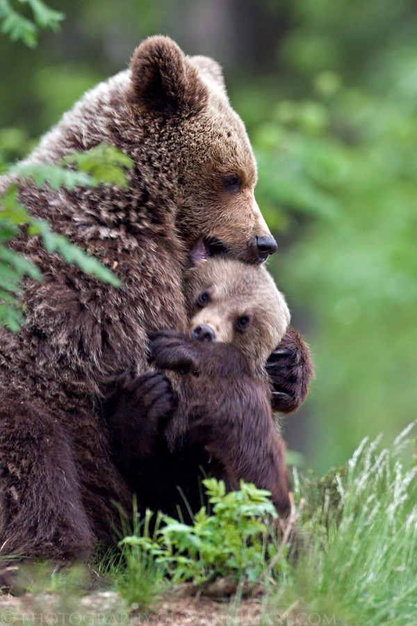 theanimalblog:  Happy Mother's Day. Photo by Giovanni Mari