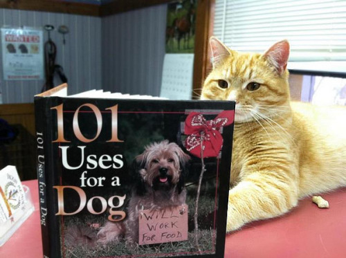 richardthecat:  cats-and-dogs-together:  Very interesting…  Uses for a dog? This better be in the fiction section.   lol