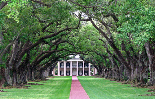phylliscoppolino:  Oak Alley Plantation by wbirt1 on Flickr. Oak Alley Plantation Magnificent 300 year old live oaks form an 800 foot long canopy over the walkway from the Mississippi River to the historic plantation named for them. They were planted 100 years before the present plantation house was built in 1837. The plantation is located in Vacherie, Louisiana, and is a National Historic Landmark. It was one of the stops on our Mississippi River cruise from Memphis to New Orleans on an old sternwheeler. It survived Katrina with a lot of broken limbs and downed branches, but no major damage.