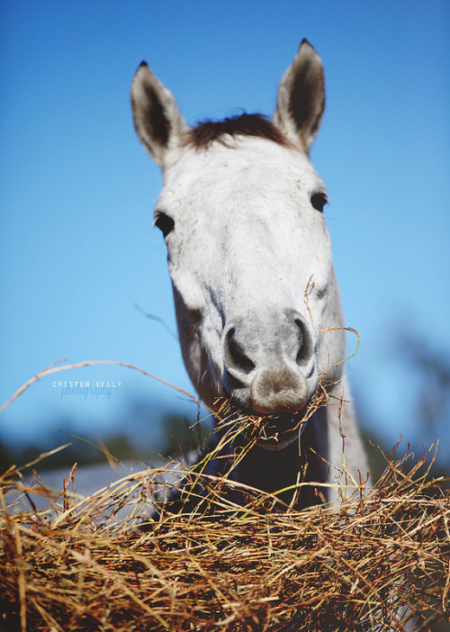 equestrian-is-life:  Hello *-*
