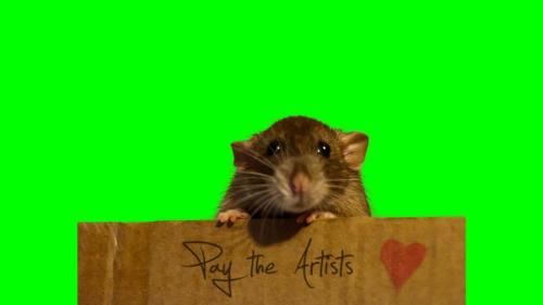 "Art has value. My dose of rat cuteness of the day. My rat Tuula wanted to defend art and music (maybe because her mum is musician/illustrator and cope daily with piracy and non remunerated art job offers). Support art, specially independent small acts. We do need the encouragement of your support. And though she couldn´t speak she had something to say :) to help me :) Thank you my sweet Tuula, and by the way you're an amazing big ""tiny"" artist yourself"