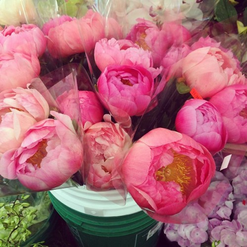 Pink peonies, please! 🌸🌺🌸🌺 #instagood #photooftheday #flowers
