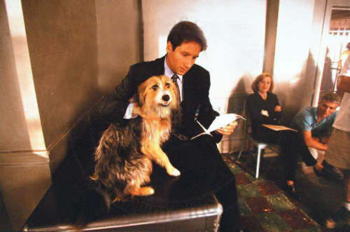 "In fact the truth behind Anderson and Duchovny's off screen relationship is perhaps as cool as the Vancouver woods in which they shoot the edgy spook opera. They are friends, but not really close friends. They rarely see each other outside of work, which probably helps fuel their inexplicable but undeniable screen chemistry. ""I think we've found that it (spending time apart) is necessary, because we spend so much time working together that if we're to be civil with each other whatsoever we need space once in a while,"" Anderson says. ""It's the same with any kind of relationship. We have very different private lives. I have a family and a daughter with whom I want to spend time, and he has his circle of friends."" Sunday Telegraph, June 1996"