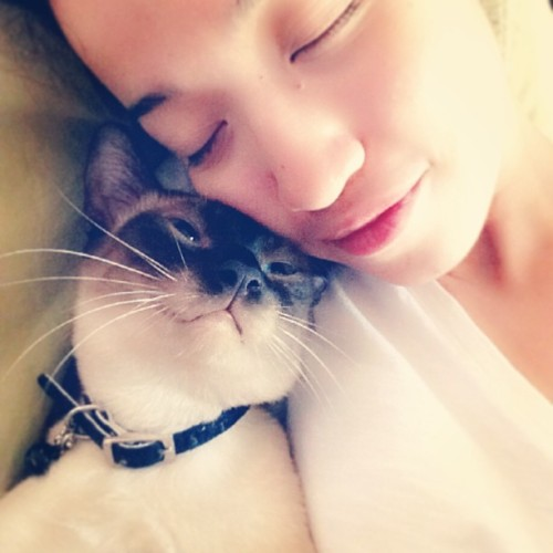 Cuddlebug! 😸 #kitty #cat #littleballoffur #purr