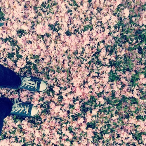 All the petals fell of the tree :( #spring #flowers
