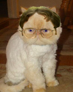 funnyordie:  Un-catty Resemblance