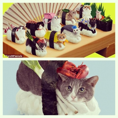 Sushi cats!!!! Too cute!
