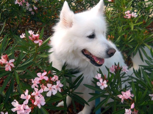 #beautiful#dogs#flowers#a
