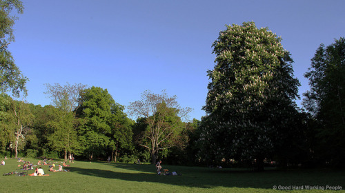 "Park lawn and majestic chestnut tree - Volkspark Friedrichshain on Flickr.Via Flickr: Still photo from the video ""Volkspark Friedrichshain (People's Park) – In A Berlin Minute (Week 159)"" Watch the video: movingpostcard.com/volkspark-friedrichshain-berlin/"