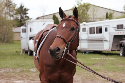 bitsnbows:  Prettiest girl <3 Fox Run Stables 2013. Photo credits to my sister.