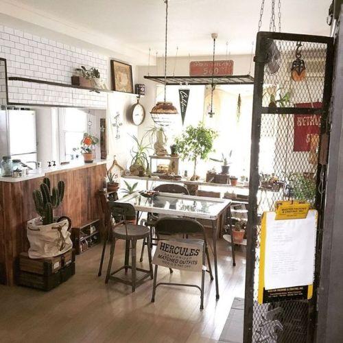 plants apartment backlight hercules cactus kitchen dining