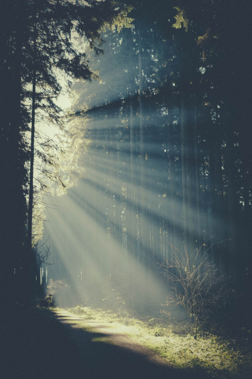 cre8ti0n:  Morning Light in the Forest