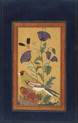 heaveninawildflower:  Finch, Poppies, Dragonfly, and Bee ( 1650-1670). Opaque watercolour and gold on paper. http://www.brooklynmuseum.org/opencollection/labs/splitsecond/painting.php?id=122 Wikimedia.