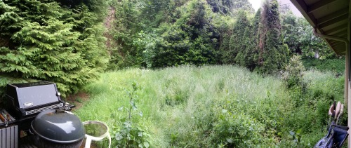 my backyard is like a baby forest