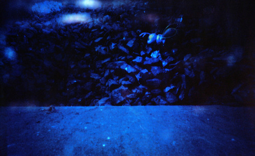 Pinhole: Child-Sized on Flickr.Inside of this room I found a bin full of coal. In the coal was a child's plastic toy (it looked like something from a Happy Meal). Something about it creeped me out in a post-apocalypse kinda way because it was so out of place. I thought a minute would be long enough since it wasn't much darker in the bin that in the room…sadly it wasn't enough time. One of the things I love about Portra…long low light exposures typically turn out blue. Zero Image 69, Kodak Portra 160, about 1 minute