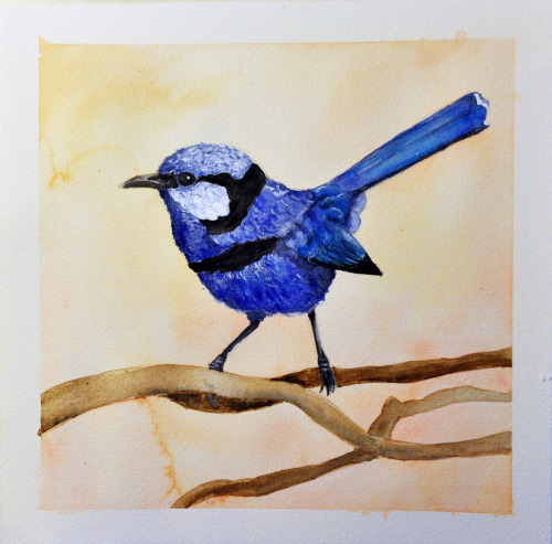 A blue wren painted for my grandma.