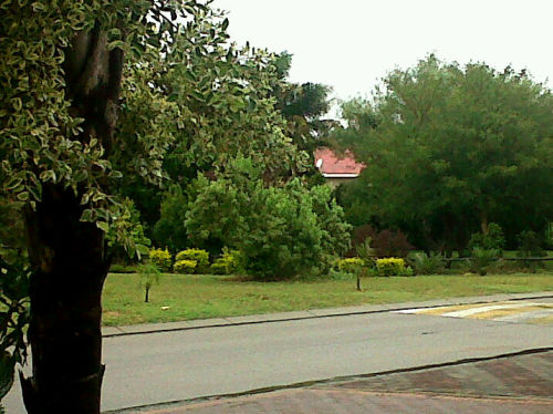 Its a grey day and the trees look green :) Beautiful day to stay home and do errrm… NOTHING!