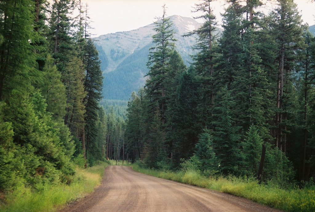 21vines:  Flathead National Forest, Montana (by jacklharding)