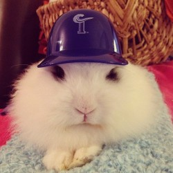 Hahah I think I reached the limit of putting a hat on him haha #baseball #tides #bunny #ilovebunny #bestoftheday #bunnyworldwide