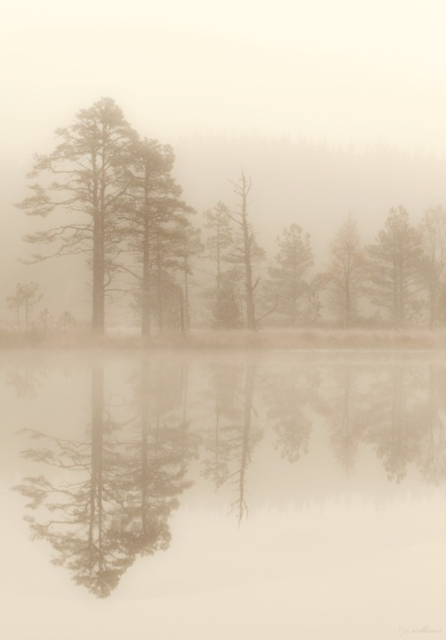 unwrittennature:  One Morning by: Jo Williams