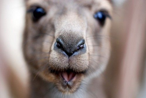 fuckyeahcuteanimalss:  (via Pucker up!)