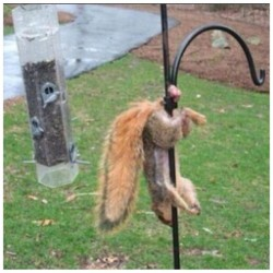 #Squirrel If you think your having a Bad Day take a Good Look! #Oouch!!!!