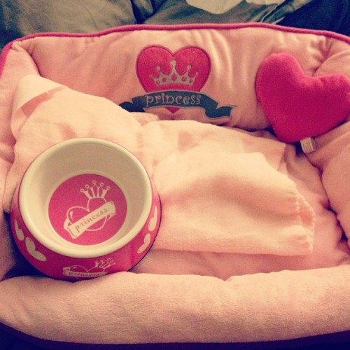 Daddy bought our little princess new things! She still sleeps on the bed though… 🐶🎀💗 #littleprincess #puppy #pink #pink #pink #toys #babyblanket #allpinkeverything  #noshame