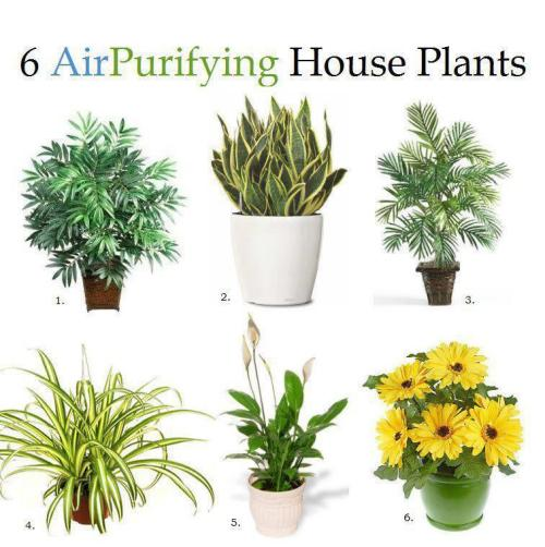 "6 Air Purifying House Plants1. Bamboo PalmAccording to NASA, it removes formaldahyde and is also said to act as a natural humidifier.2. Snake PlantFound by NASA to absorb nitrogen oxides and formaldahyde.3. Areca PalmOne of the best air purifying plants for general air cleanliness.4. Spider PlantGreat indoor plant for removing carbon monoxide and other toxins or impurities. Spider plants are one of three plants NASA deems best at removing formaldahyde from the air.5. Peace LilyPeace lilies could be called the ""clean-all."" They're often placed in bathrooms or laundry rooms because they're known for removing mold spores. Also know to remove formaldahyde and trichloroethylene.6. Gerbera DaisyNot only do these gorgeous flowers remove benzene from the air, they're known to improve sleep by absorbing carbon dioxide and giving off more oxygen over night."