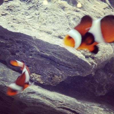Clown fishies !