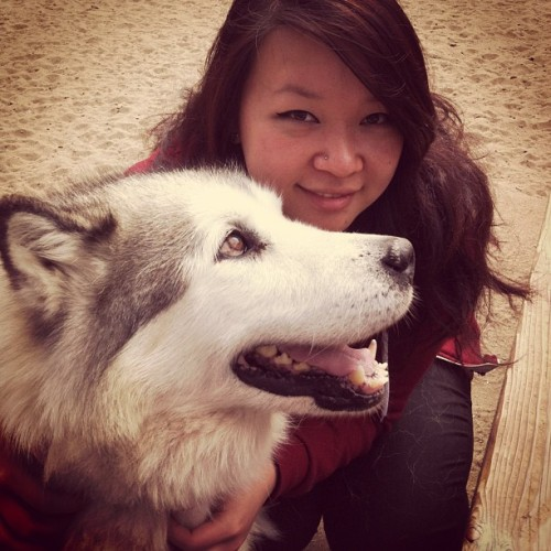 Such a big fluffy malamute 😍