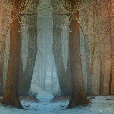 Forest Tales by ildikoneer on Flickr.
