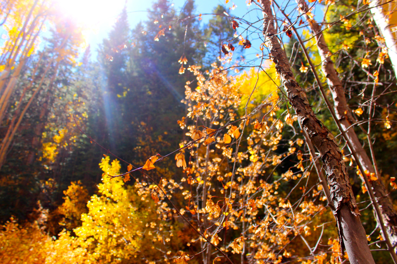 Santa Fe National Forest. October 2012.