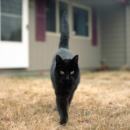 photogenicfelines: (Eddie Erdmann)