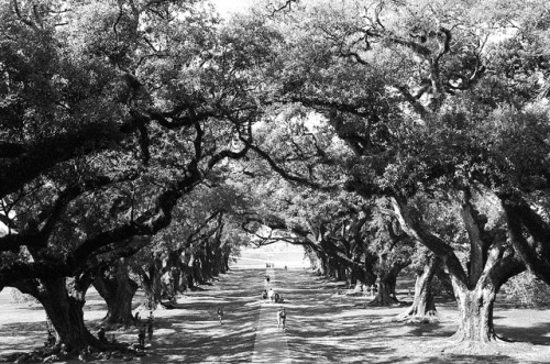 Oak Alley Plantation St James Parish Louisiana by David Swift Photography on Flickr.